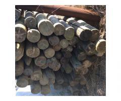 Imprägnierte Holzsteher